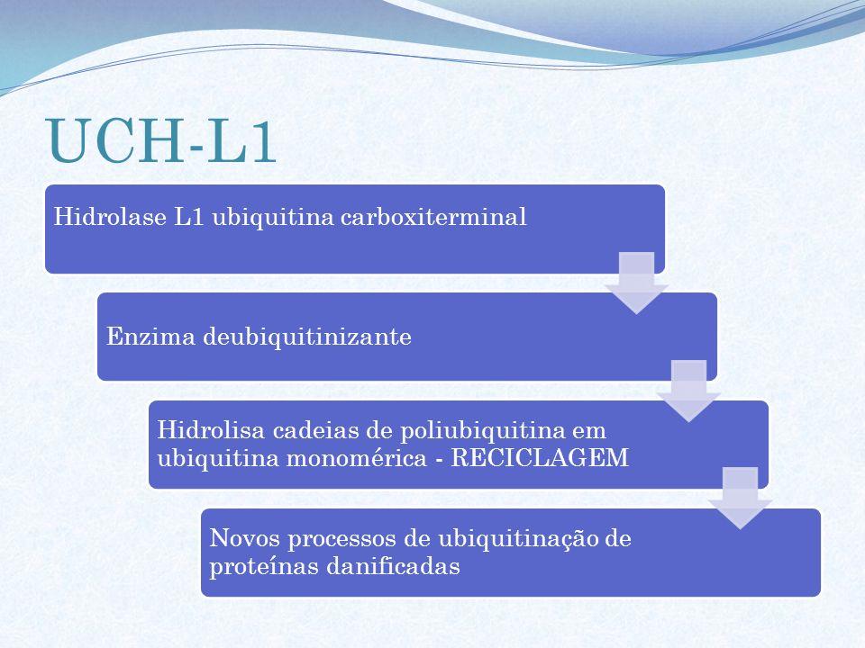 UCH-L1 Hidrolase L1 ubiquitina carboxiterminal Enzima deubiquitinizante Hidrolisa cadeias de poliubiquitina em ubiquitina monomérica - RECICLAGEM Novo
