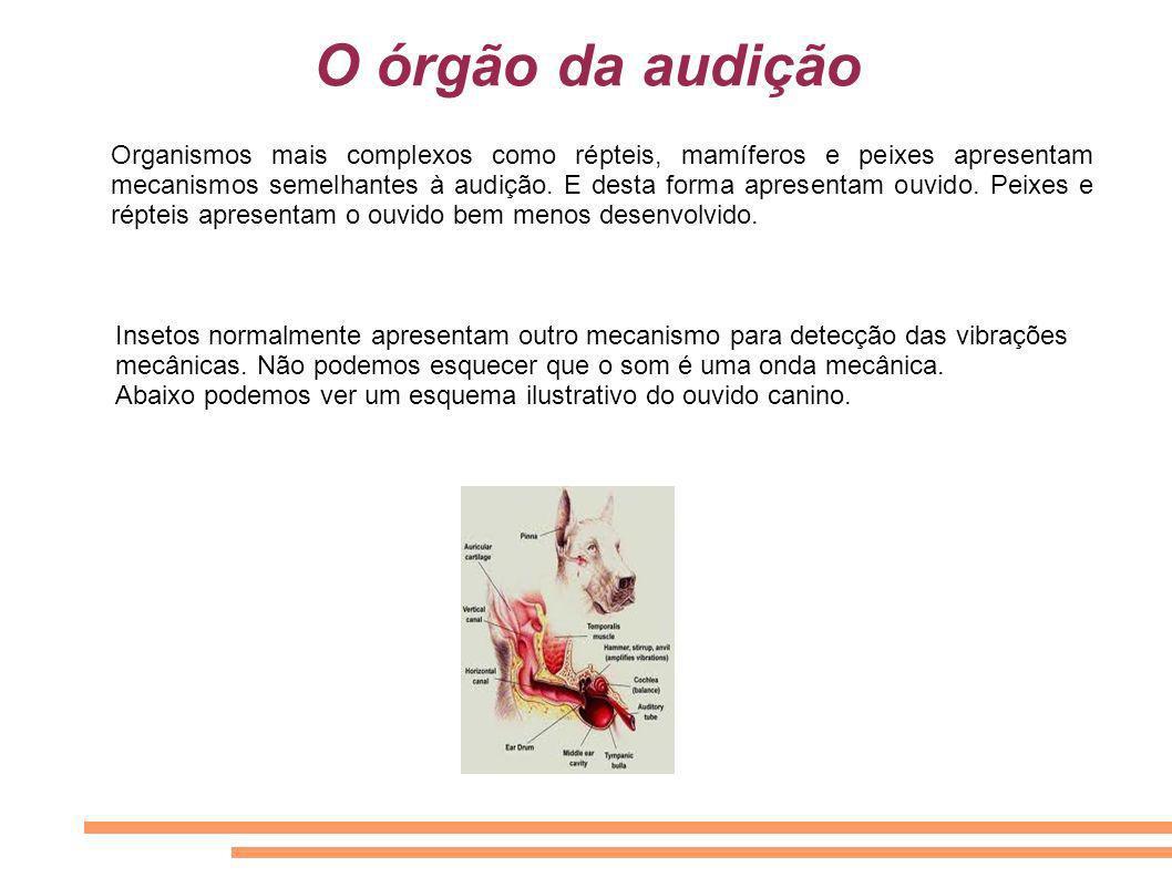 O órgão da audição Organismos mais complexos como répteis, mamíferos e peixes apresentam mecanismos semelhantes à audição. E desta forma apresentam ou