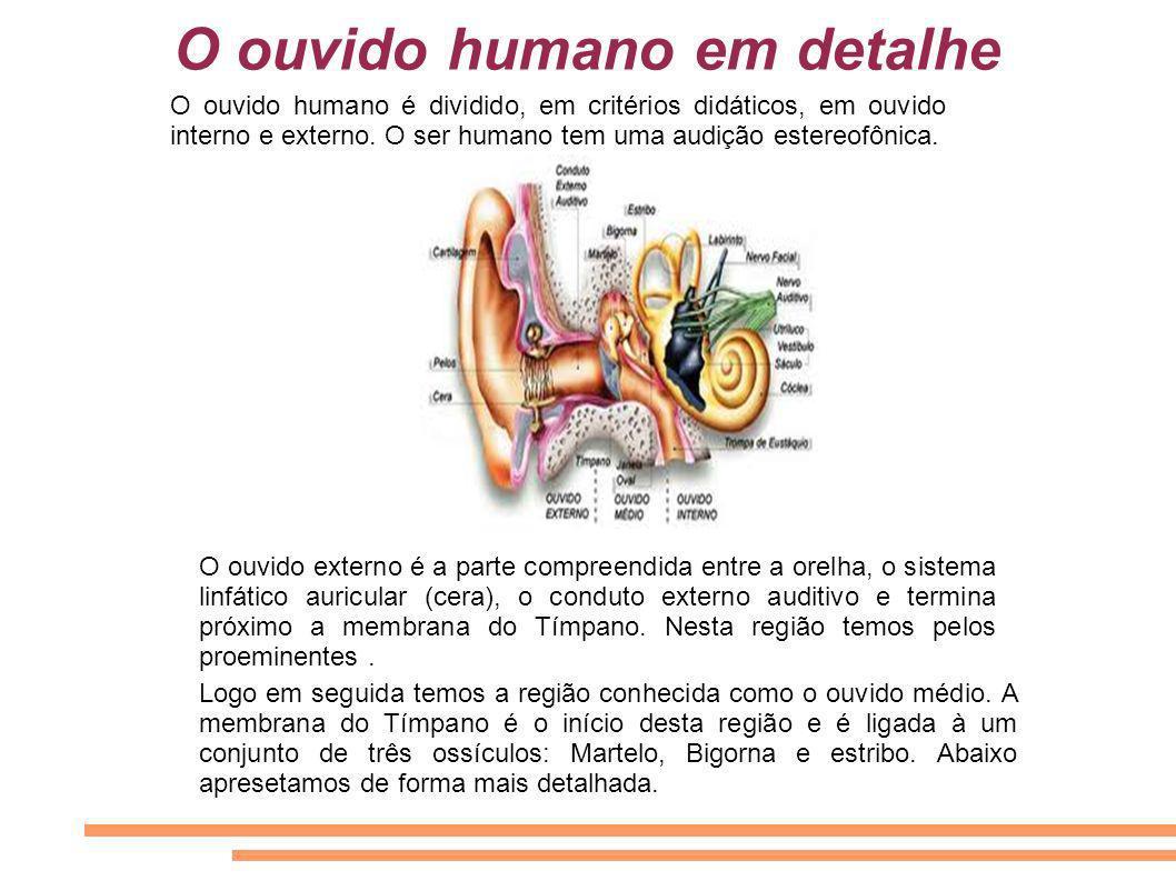 O ouvido humano em detalhe O ouvido humano é dividido, em critérios didáticos, em ouvido interno e externo. O ser humano tem uma audição estereofônica