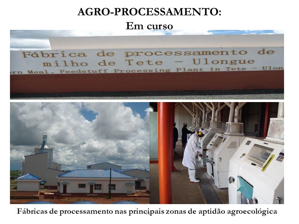 AGRO-PROCESSAMENTO: Em curso Fábricas de processamento nas principais zonas de aptidão agroecológica P4P