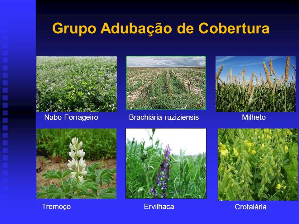 Nabo ForrageiroBrachiária ruziziensis Tremoço Ervilhaca Grupo Adubação de Cobertura Milheto Crotalária