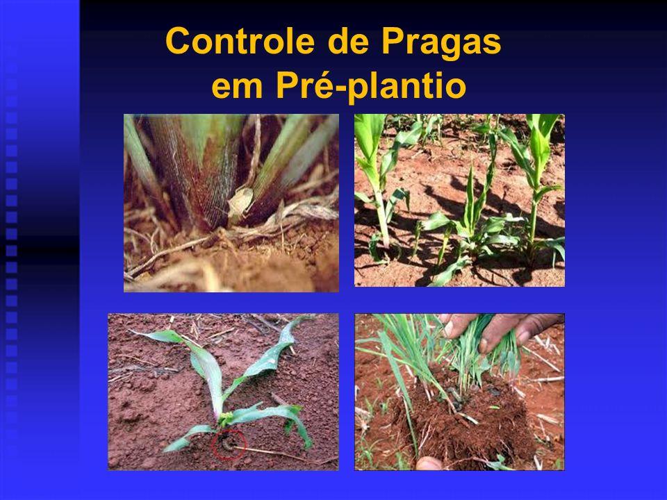 Controle de Pragas em Pré-plantio