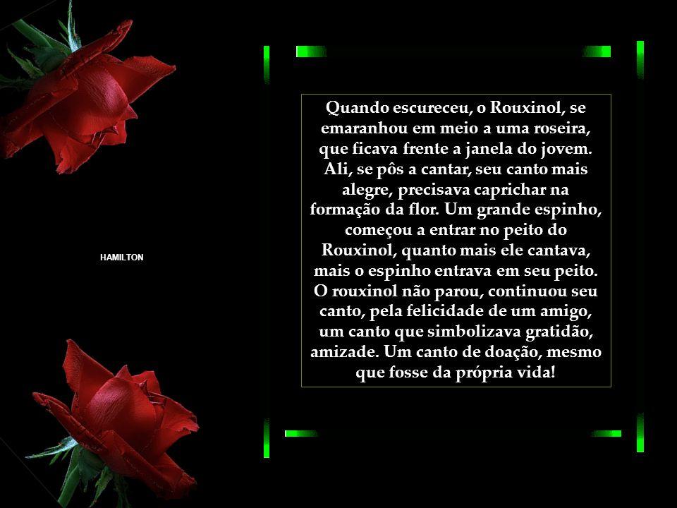 O Rouxinol, que escutara a conversa, ficou penalizado pela desolação do jovem, teria que fazer algo para ajudar seu amigo, a conseguir a flor. Assim,
