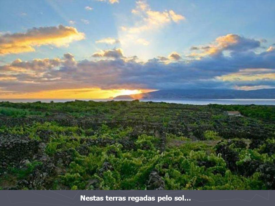 Agora, ao fundo, a soberana ilha do Pico.
