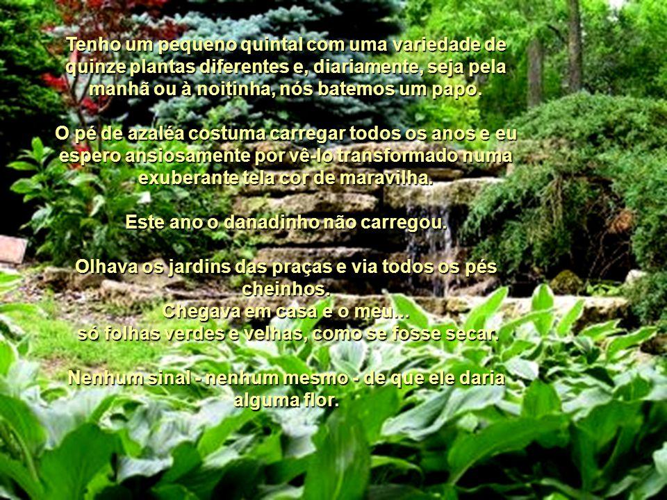 Aconteceu No Meu Jardim Fátima Irene Pinto Certa feita me perguntaram se eu já havia vivenciado alguma experiência sobrenatural ou inexplicável. Sim,