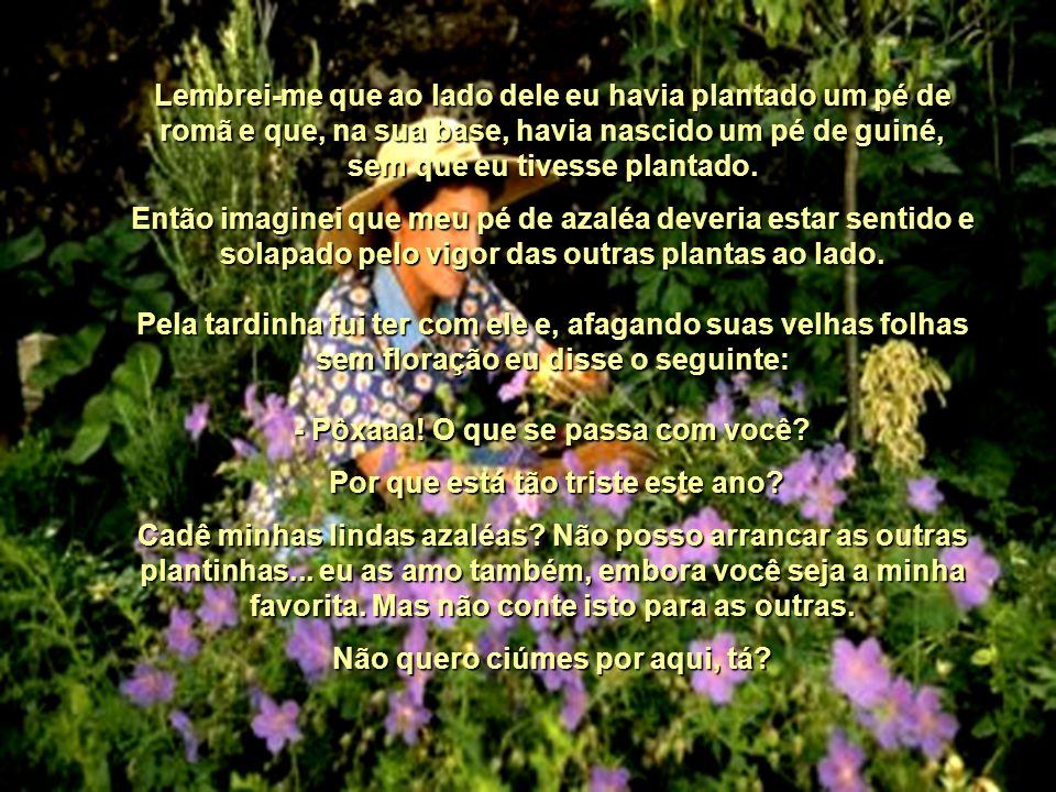 Tenho um pequeno quintal com uma variedade de quinze plantas diferentes e, diariamente, seja pela manhã ou à noitinha, nós batemos um papo. O pé de az