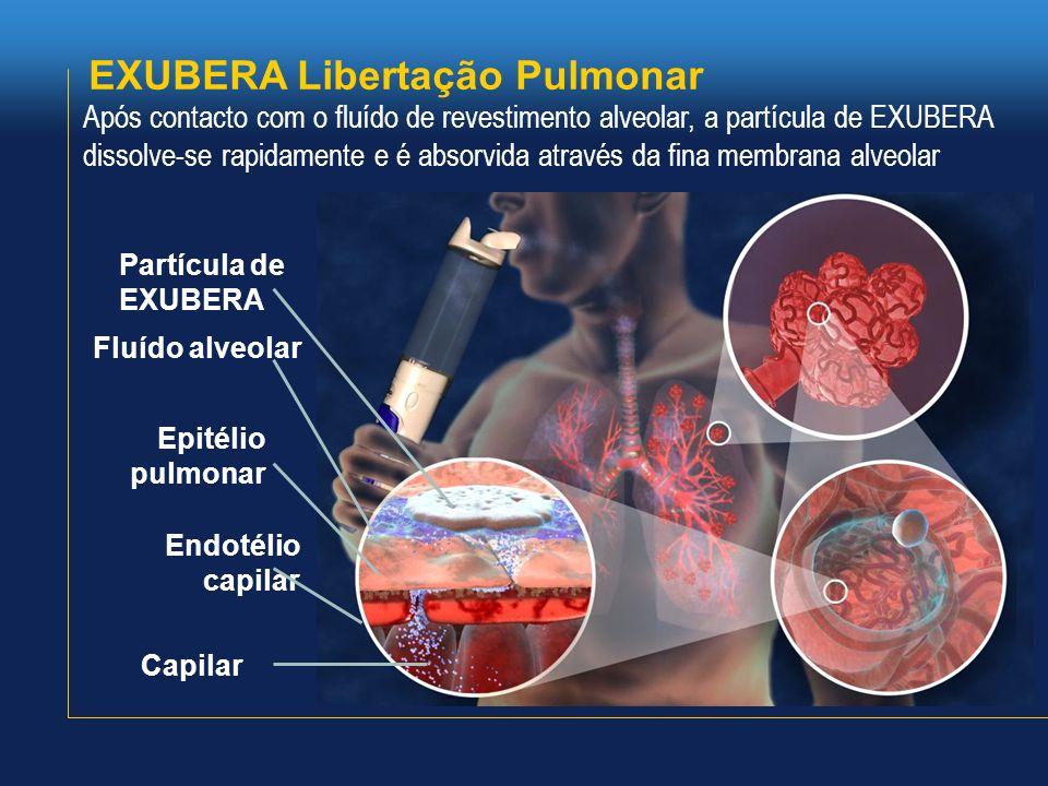 EXUBERA Libertação Pulmonar Partícula de EXUBERA Fluído alveolar Epitélio pulmonar Endotélio capilar Capilar Após contacto com o fluído de revestiment