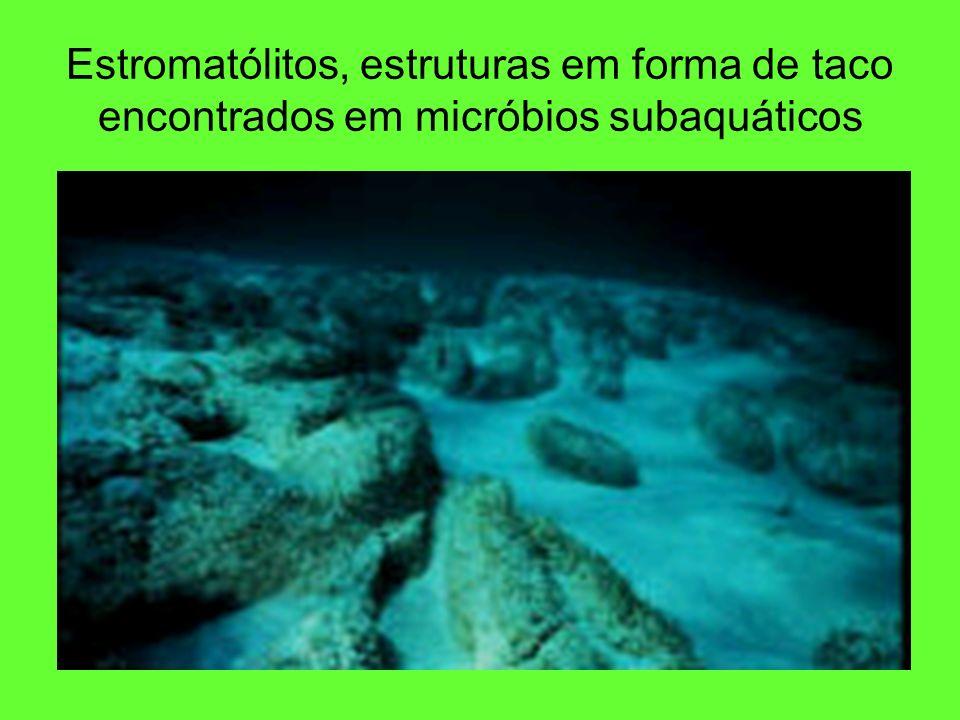 Estromatólitos, estruturas em forma de taco encontrados em micróbios subaquáticos