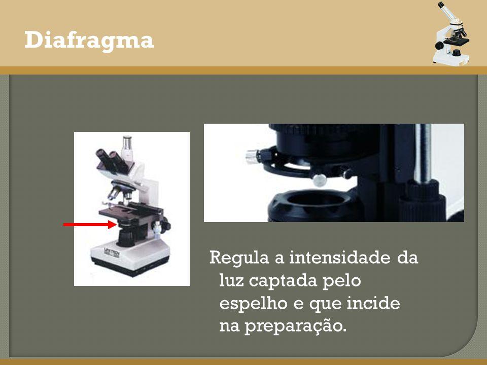 Diafragma Regula a intensidade da luz captada pelo espelho e que incide na preparação.