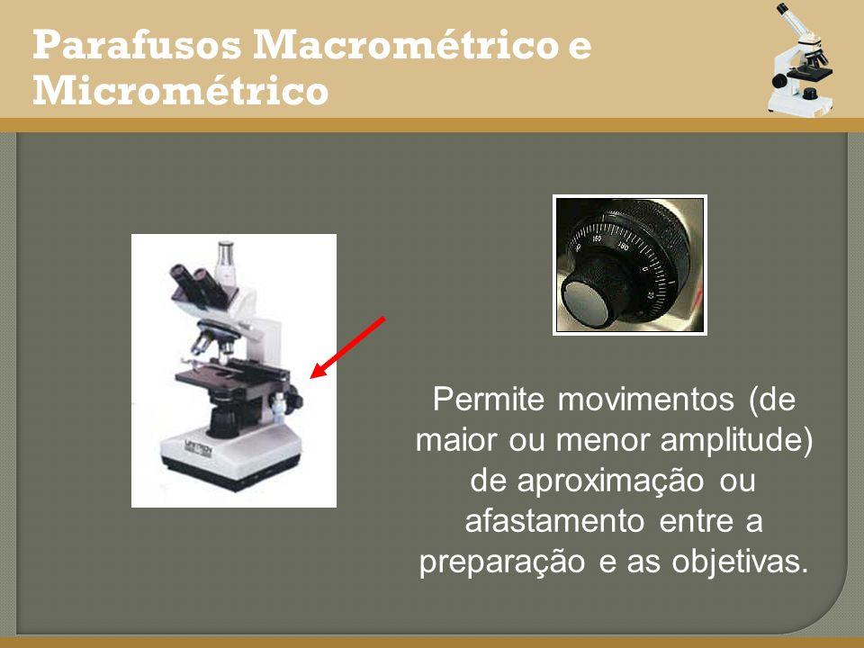 Parafusos Macrométrico e Micrométrico Permite movimentos (de maior ou menor amplitude) de aproximação ou afastamento entre a preparação e as objetivas