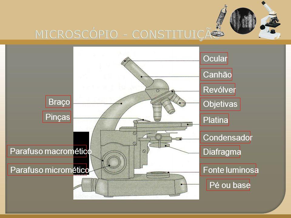 Base ou pé Constitui a base de suporte de todos os elementos do microscópio.
