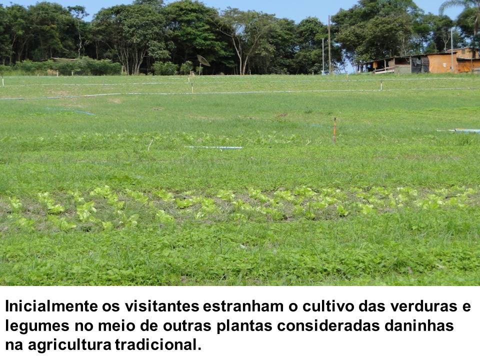 Inicialmente os visitantes estranham o cultivo das verduras e legumes no meio de outras plantas consideradas daninhas na agricultura tradicional.