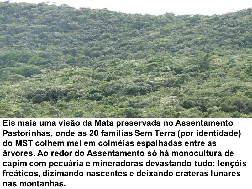Eis mais uma visão da Mata preservada no Assentamento Pastorinhas, onde as 20 famílias Sem Terra (por identidade) do MST colhem mel em colméias espalh