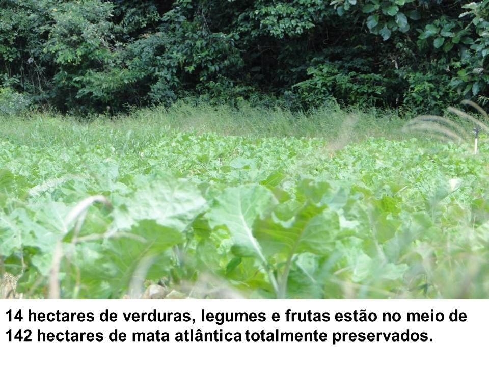14 hectares de verduras, legumes e frutas estão no meio de 142 hectares de mata atlântica totalmente preservados.