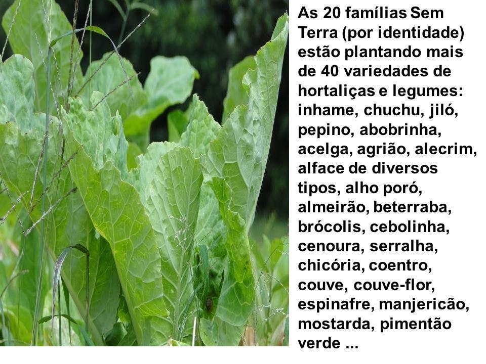 As 20 famílias Sem Terra (por identidade) estão plantando mais de 40 variedades de hortaliças e legumes: inhame, chuchu, jiló, pepino, abobrinha, acel