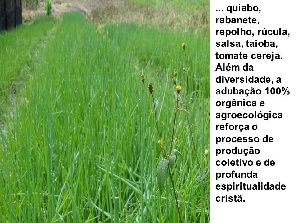 ... quiabo, rabanete, repolho, rúcula, salsa, taioba, tomate cereja. Além da diversidade, a adubação 100% orgânica e agroecológica reforça o processo