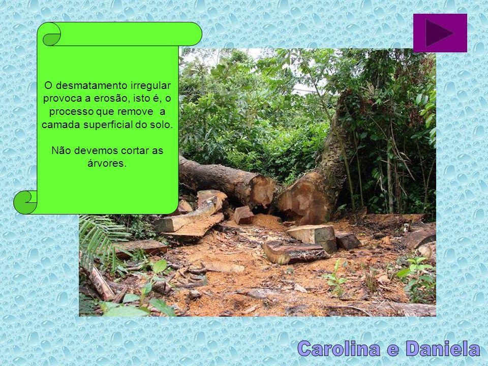 O desmatamento irregular provoca a erosão, isto é, o processo que remove a camada superficial do solo.