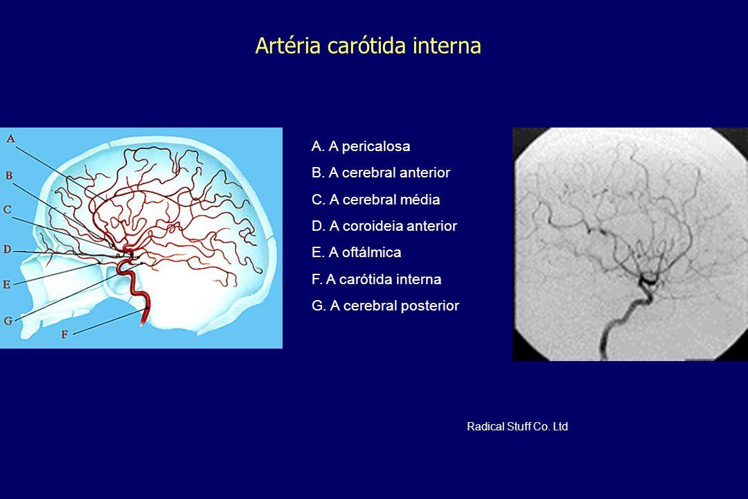 Artéria carótida interna A. A pericalosa B. A cerebral anterior C. A cerebral média D. A coroideia anterior E. A oftálmica F. A carótida interna G. A