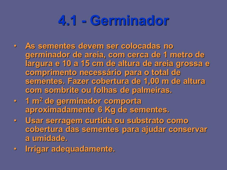 4.1 - Germinador As sementes devem ser colocadas no germinador de areia, com cerca de 1 metro de largura e 10 a 15 cm de altura de areia grossa e comp