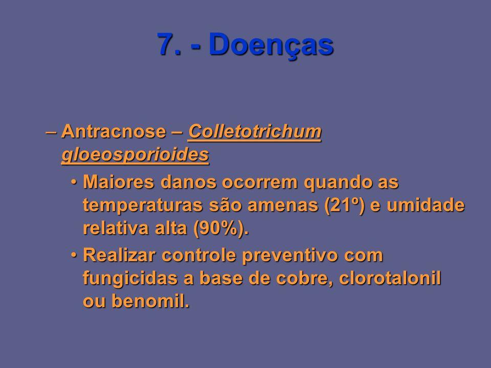 7. - Doenças –Antracnose – Colletotrichum gloeosporioides Maiores danos ocorrem quando as temperaturas são amenas (21º) e umidade relativa alta (90%).