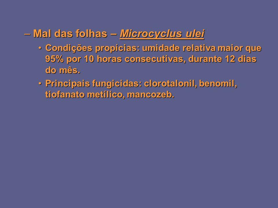 –Mal das folhas – Microcyclus ulei Condições propícias: umidade relativa maior que 95% por 10 horas consecutivas, durante 12 dias do mês.Condições propícias: umidade relativa maior que 95% por 10 horas consecutivas, durante 12 dias do mês.