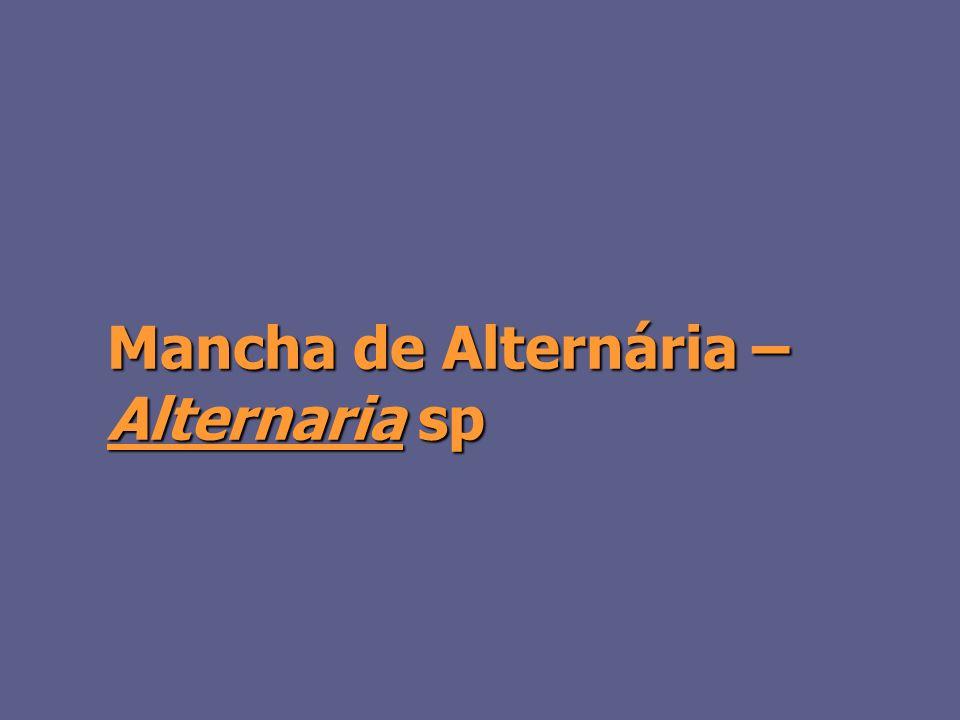 Mancha de Alternária – Alternaria sp