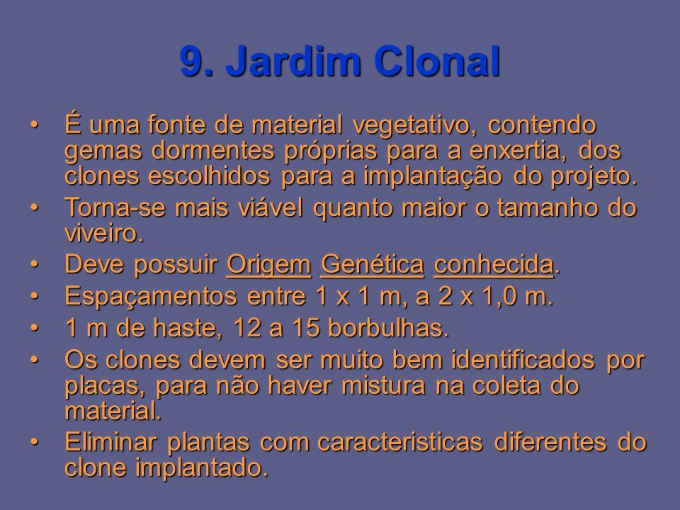 9. Jardim Clonal É uma fonte de material vegetativo, contendo gemas dormentes próprias para a enxertia, dos clones escolhidos para a implantação do pr