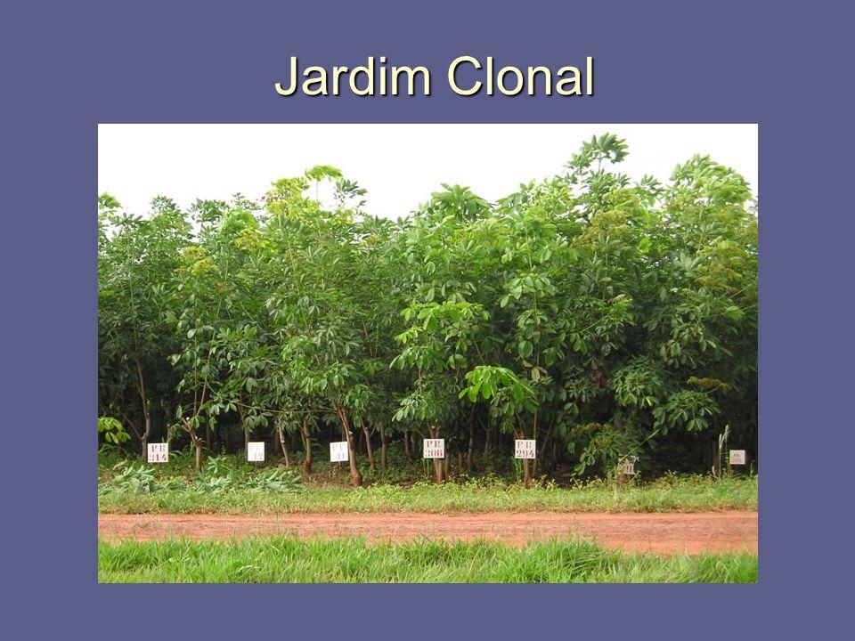 Jardim Clonal Jardim Clonal