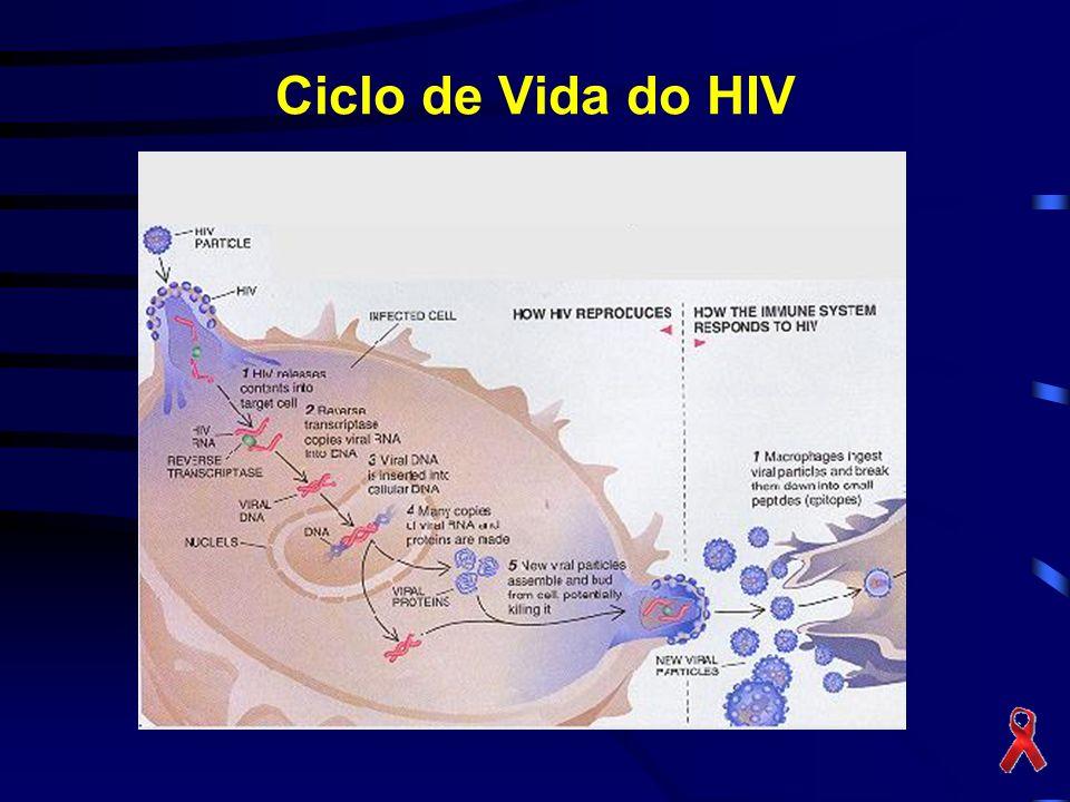 Ciclo de Vida do HIV
