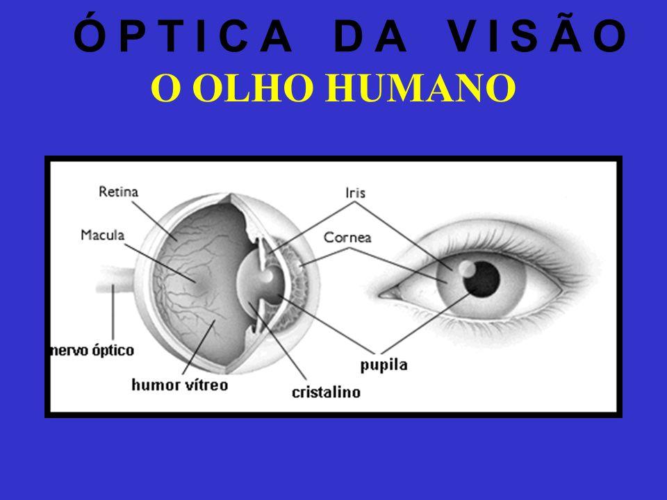1 - CÓRNEA 2 - ÍRIS 3 - ESCLERÓTICA 4 - MÚSCULO RETO SUPERIOR 5 - MÚSCULO RETO LATERAL 6 - MÚSCULO OBLÍQUO INFERIOR 7 - MÚSCULO RETO INFERIOR Vários músculos realizam a parte mecânica da visão - suporte e movimento para o olho (sensor).