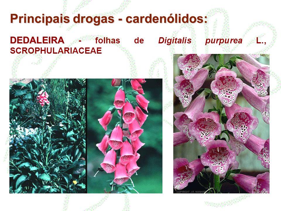 DEDALEIRA DEDALEIRA - folhas de Digitalis purpurea L., SCROPHULARIACEAE Principais drogas - cardenólidos: