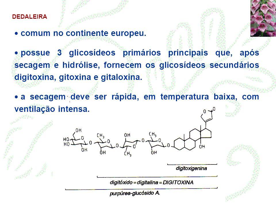 DEDALEIRA comum no continente europeu. possue 3 glicosídeos primários principais que, após secagem e hidrólise, fornecem os glicosídeos secundários di