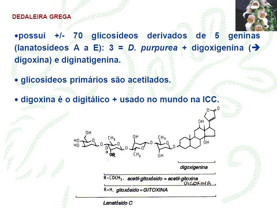DEDALEIRA GREGA possui +/- 70 glicosídeos derivados de 5 geninas (lanatosídeos A a E): 3 = D. purpurea + digoxigenina ( digoxina) e diginatigenina. gl