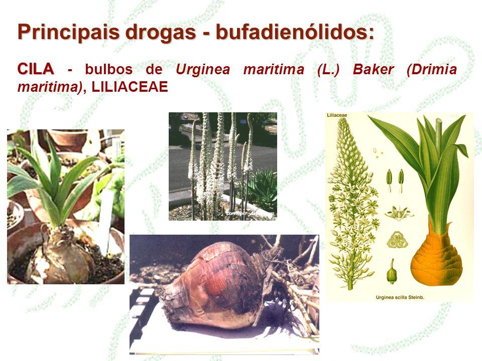 CILA CILA - bulbos de Urginea maritima (L.) Baker (Drimia maritima), LILIACEAE Principais drogas - bufadienólidos: