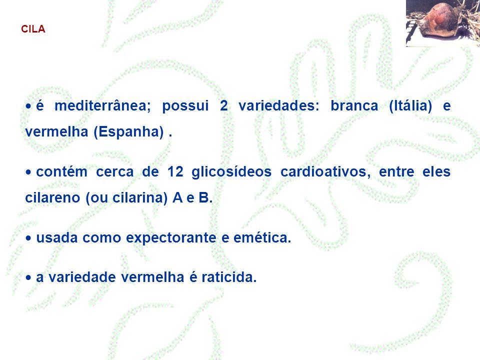 CILA é mediterrânea; possui 2 variedades: branca (Itália) e vermelha (Espanha). contém cerca de 12 glicosídeos cardioativos, entre eles cilareno (ou c