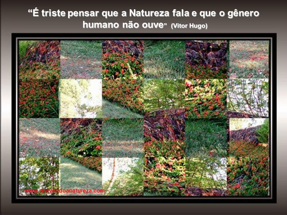 Transforme seus sonhos em realidade, aprenda a ter mais persistência e aja de forma objetiva (Irene Alvina) www.revivendoanatureza.com