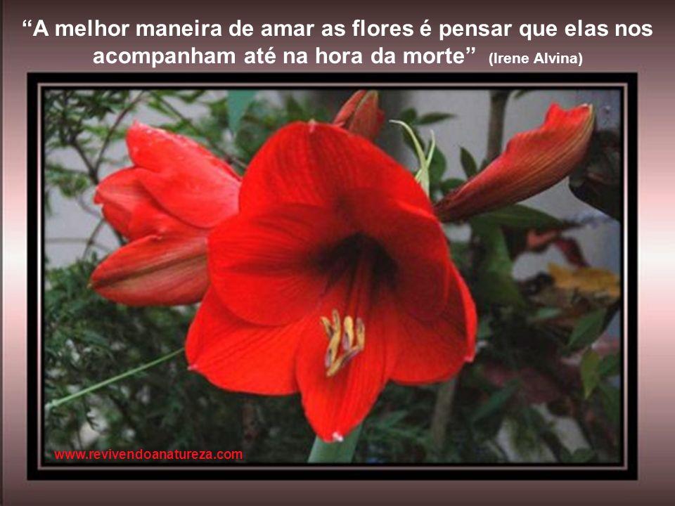 É triste pensar que a Natureza fala e que o gênero humano não ouve (Vitor Hugo) www.revivendoanatureza.com