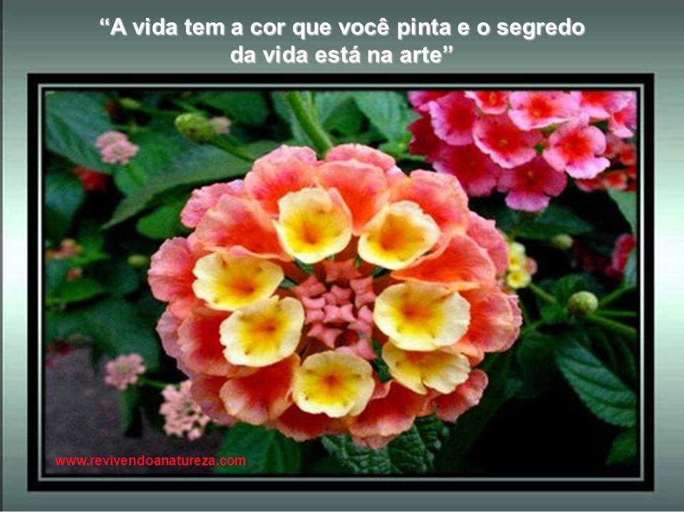 A melhor maneira de amar as flores é pensar que elas nos acompanham até na hora da morte (Irene Alvina) www.revivendoanatureza.com