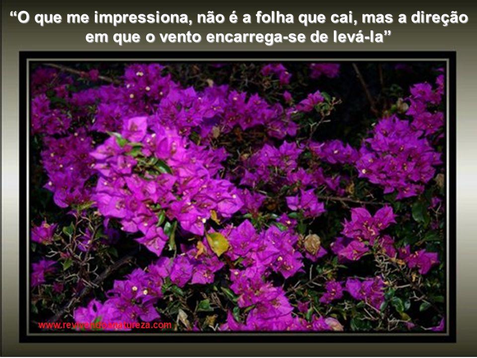 A vida tem a cor que você pinta e ee e o segredo da vida está na arte www.revivendoanatureza.com