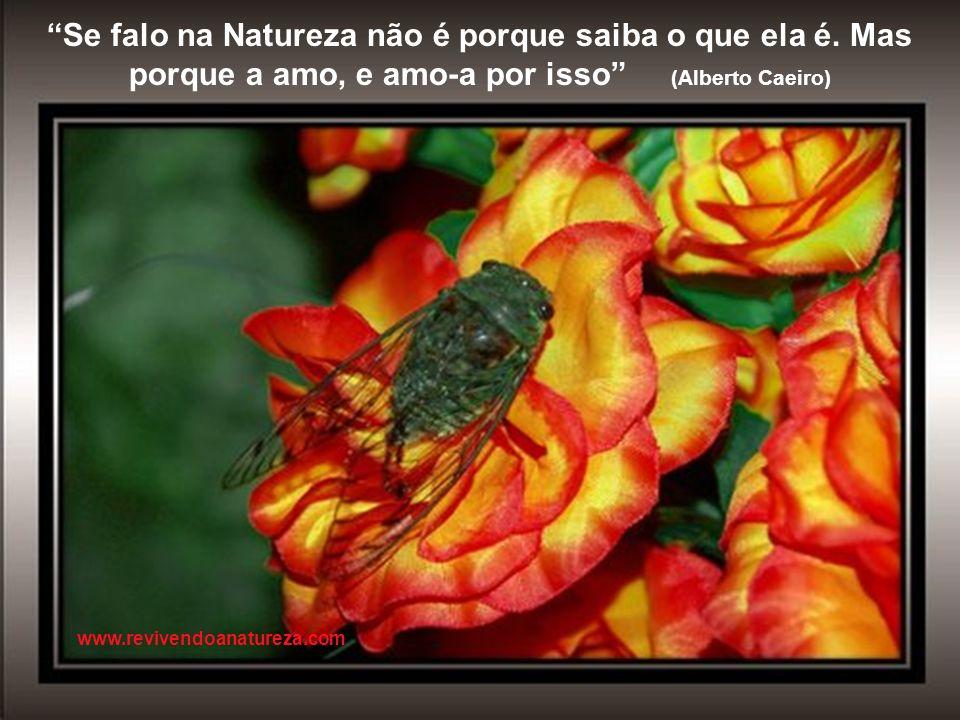 O que me impressiona, não é a folha que cai, mas a direção em que o vento encarrega-se de levá-la www.revivendoanatureza.com