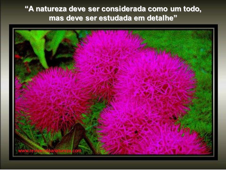 Se falo na Natureza não é porque saiba o que ela é. Mas porque a amo, e amo-a por isso (Alberto Caeiro) www.revivendoanatureza.com