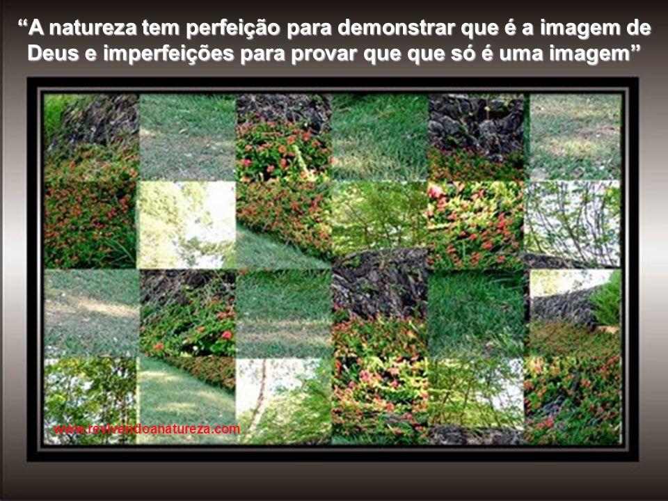 A natureza deve ser considerada como um todo, mas deve ser estudada em detalhe www.revivendoanatureza.com