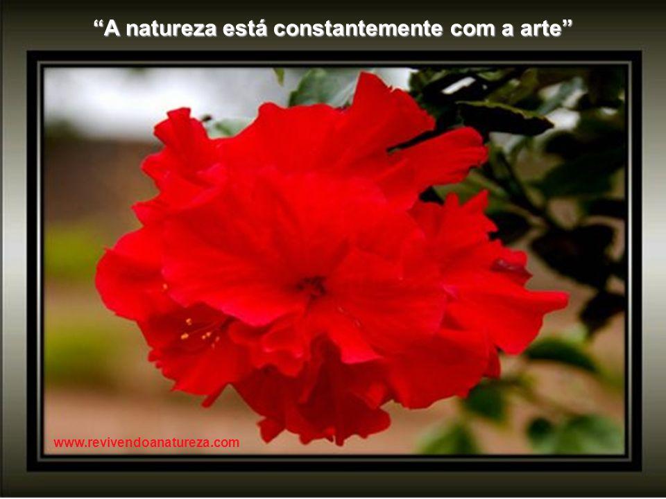 A natureza tem perfeição para demonstrar que é a imagem de Deus e imperfeições para provar que que só é uma imagem www.revivendoanatureza.com