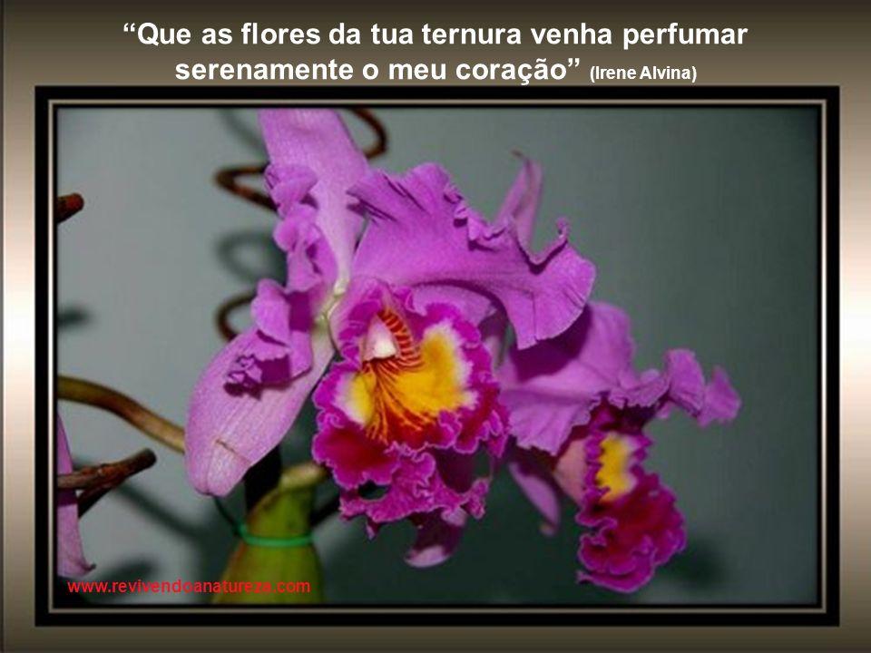 A natureza está constantemente com a arte www.revivendoanatureza.com
