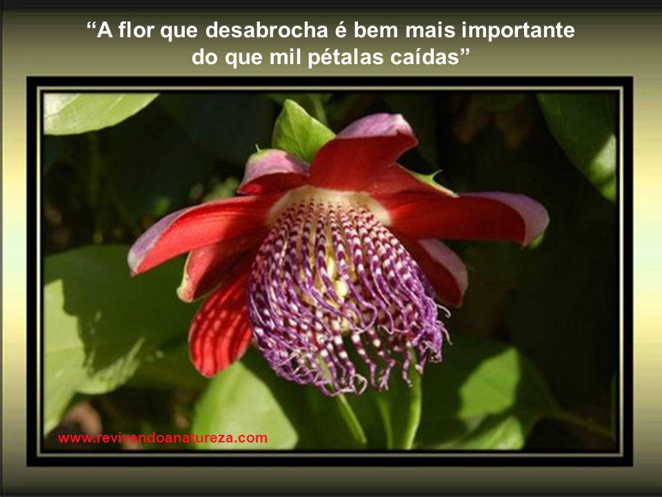 Que as flores da tua ternura venha perfumar serenamente o meu coração (Irene Alvina) www.revivendoanatureza.com