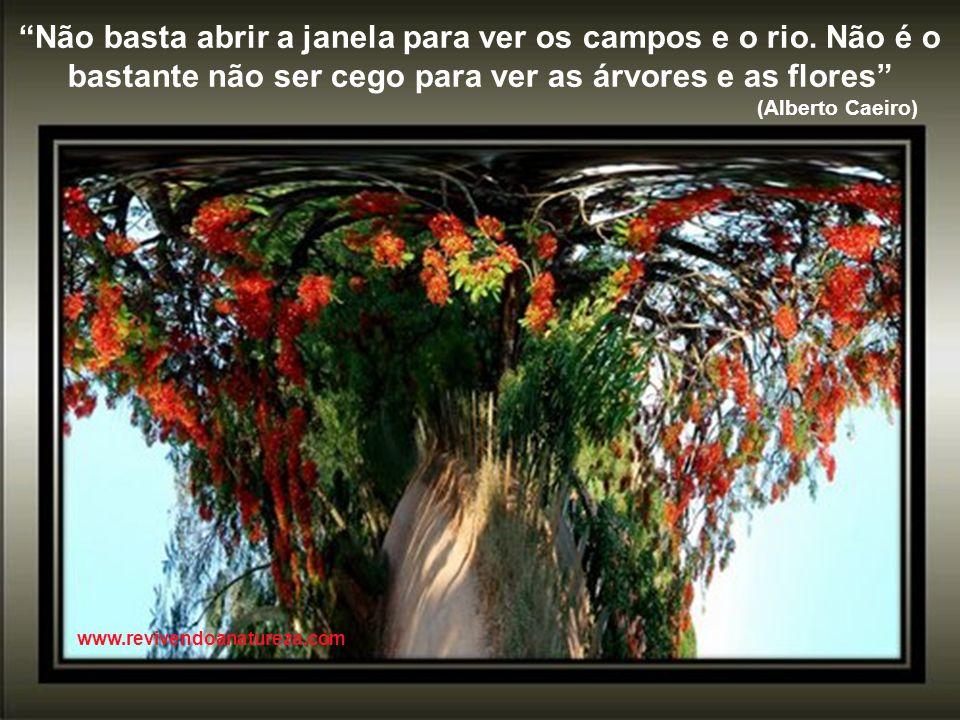 A flor que desabrocha é bem mais importante do que mil pétalas caídas www.revivendoanatureza.com