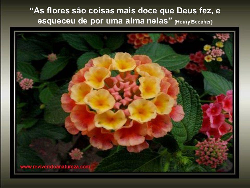 Podem nos tirar as flores, mas nunca a primavera (Henri Matisse) www.revivendoanatureza.com