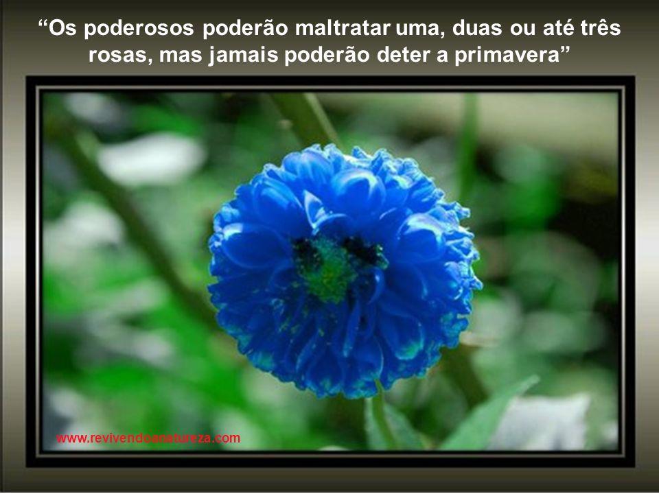A beleza da Natureza é o carinhoso sorriso de Cristo, mostrado através da matéria (G.K. Chesterton) www.revivendoanatureza.com