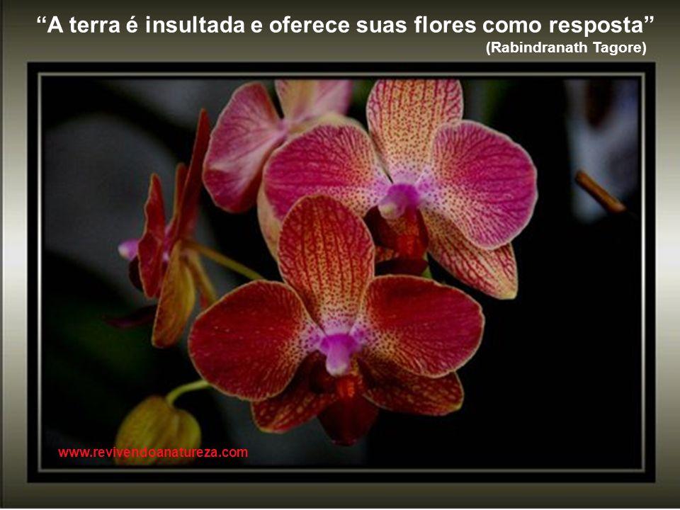 Os poderosos poderão maltratar uma, duas ou até três rosas, mas jamais poderão deter a primavera www.revivendoanatureza.com
