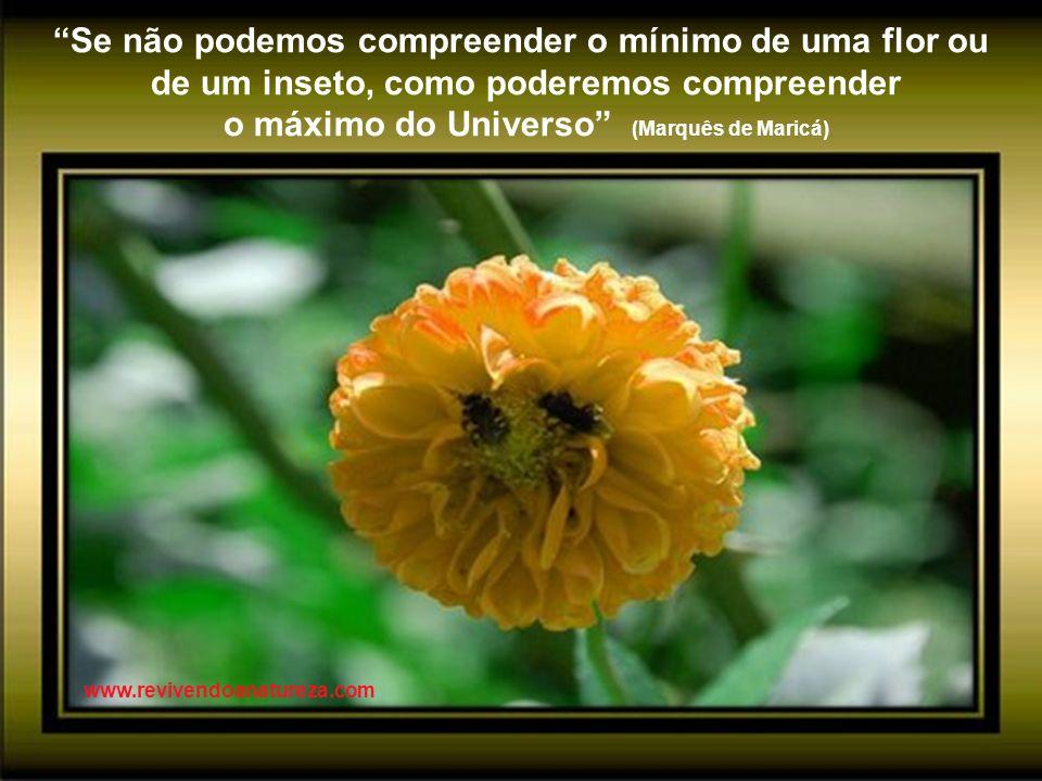 A terra é insultada e oferece suas flores como resposta (Rabindranath Tagore) www.revivendoanatureza.com